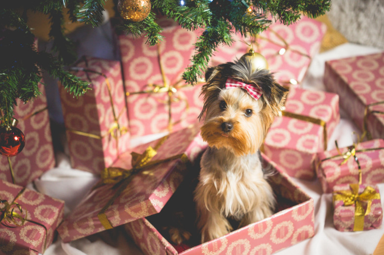 https://picjumbo.com/download/?d=HNCK0134.jpg&n=cute-puppy-as-a-christmas-present-surprise